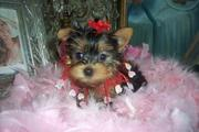 Lovely looking outstanding teacup (Velma)For Adoption
